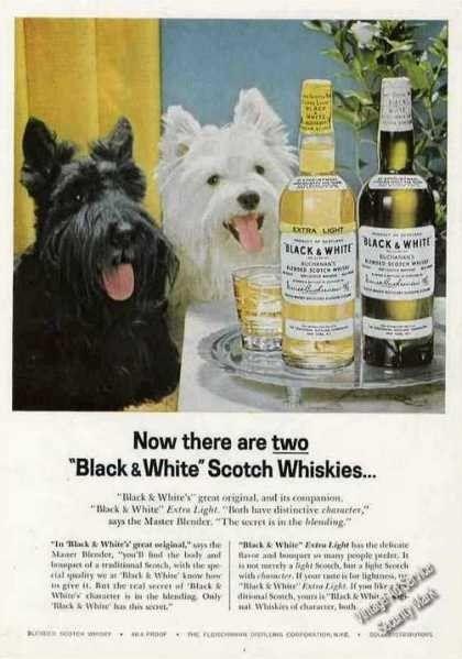 Pub BLACK & WHITE 1963