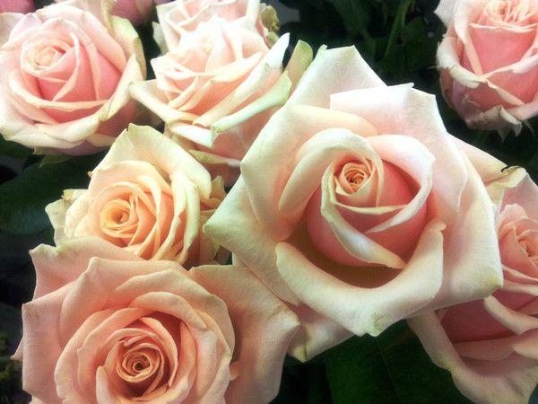 des roses anciennes roses chez le fleuriste centerblog. Black Bedroom Furniture Sets. Home Design Ideas
